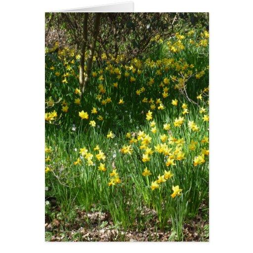 Tarjeta de los narcisos de la primavera