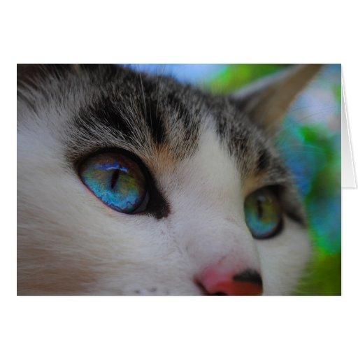 Tarjeta de los ojos de gato azul