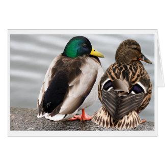 Tarjeta de los pares del pato del pato silvestre