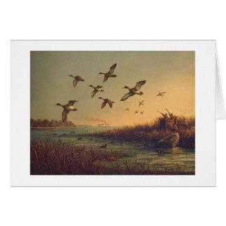 """Tarjeta de los """"patos silvestres del este de la or"""