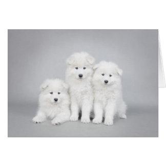 Tarjeta de los perritos del samoyedo