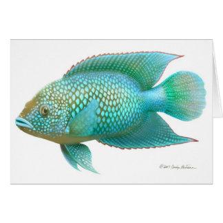 Tarjeta de los pescados de Cichlid de Jack Dempsey