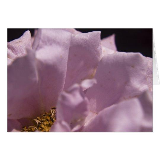 Tarjeta de los pétalos color de rosa de Lavendar