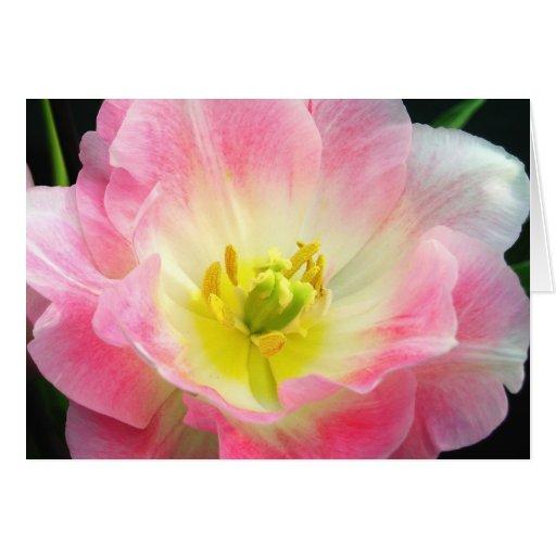 Tarjeta de los pétalos del rosa impactante