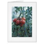 Tarjeta de los tomates del jardín