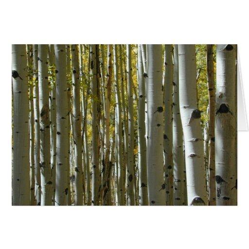 Tarjeta de los troncos II de Aspen