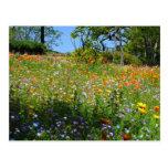 Tarjeta de los wildflowers de Napa Tarjeta Postal