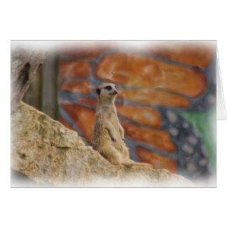 Tarjeta de Meerkat