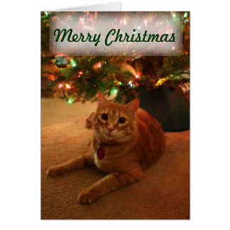 Tarjeta de Navidad anaranjada del Tabby