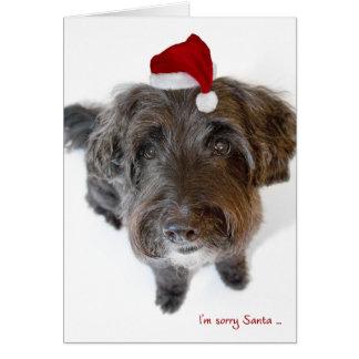 Tarjeta de Navidad chistosa - perro en el gorra mi