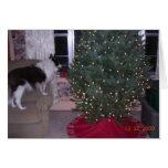 Tarjeta de Navidad de Cassie