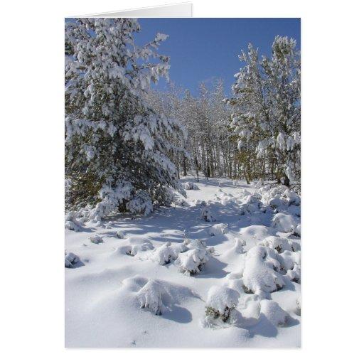 Tarjeta de Navidad de la belleza de Colorado