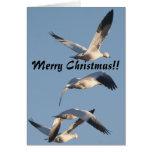 Tarjeta de Navidad de los gansos de nieve