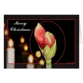 Tarjeta de Navidad del Amaryllis