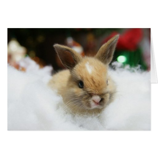 Tarjeta de Navidad del conejo de conejito del bebé