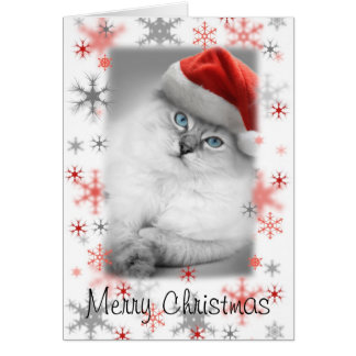 tarjeta de Navidad del gatito de santa