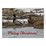 Tarjeta de Navidad del pato del pato silvestre