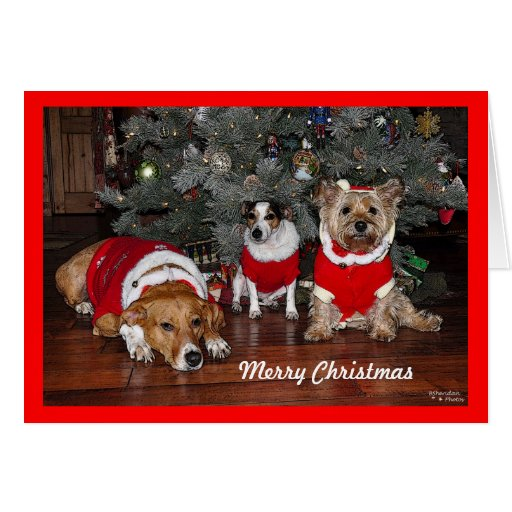 Tarjeta de Navidad del perro