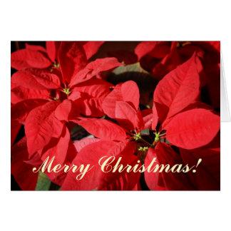 Tarjeta de Navidad del Poinsettia