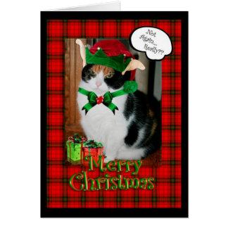 Tarjeta de Navidad divertida, gato gruñón