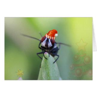 Tarjeta de Navidad especial con un blowfly