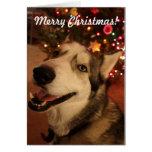 Tarjeta de Navidad feliz del husky siberiano