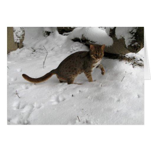 Tarjeta de Navidad - gato manchado oxidado 2