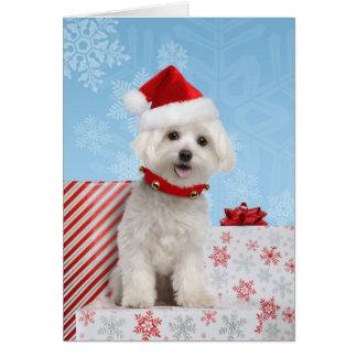 Tarjeta de Navidad maltesa del perrito