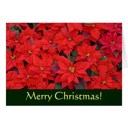 Tarjeta de Navidad roja de los Poinsettias (espaci