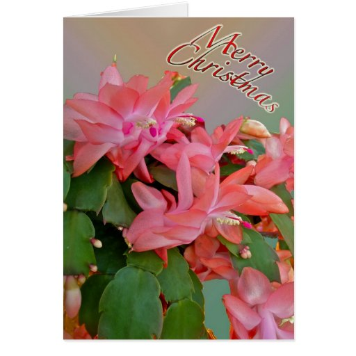 Tarjeta de Navidad roja del cactus de navidad