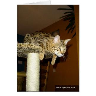 Tarjeta de Ninja del gato de la sabana