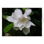 Tarjeta de nota blanca brillante de las floracione