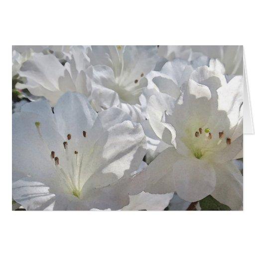 Tarjeta de nota blanca de las azaleas de la acuare