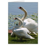 Tarjeta de nota blanca de los cisnes