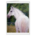 Tarjeta de nota blanca del caballo de la belleza