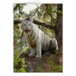 Tarjeta de nota blanca del tigre