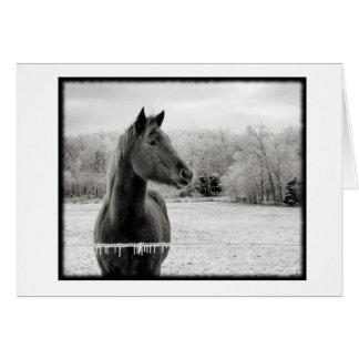 Tarjeta de nota blanco y negro del caballo del inv
