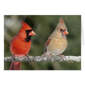 Tarjeta de nota cardinal septentrional de la fotog