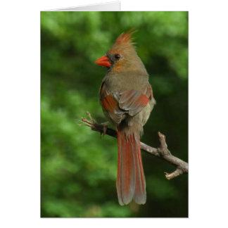 Tarjeta de nota cardinal septentrional del pájaro