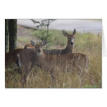 Tarjeta de nota - ciervo - pares curiosos