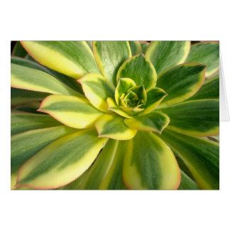 Tarjeta de nota colorida del Succulent #2