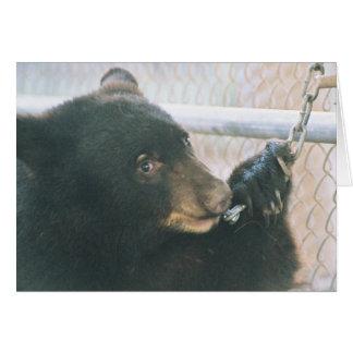 Tarjeta de nota de Cub de oso - cadena