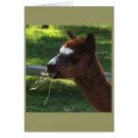 Tarjeta de nota de la alpaca