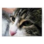 Tarjeta de nota de la cara del gato