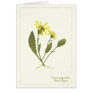 Tarjeta de nota de la flor de la pradera del Ragwo