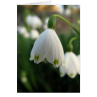 Tarjeta de nota de la flor del descenso de la niev