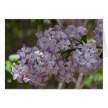 Tarjeta de nota de la lila