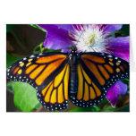 Tarjeta de nota de la mariposa del deslumbramiento