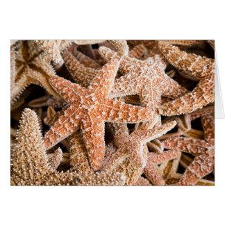 Tarjeta de nota de las estrellas de mar del azúcar
