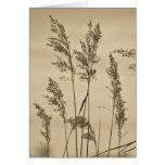 Tarjeta de nota de las hierbas